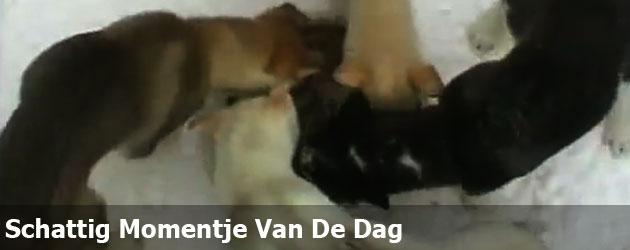 Schattig Momentje Van De Dag; puppy draaimolen