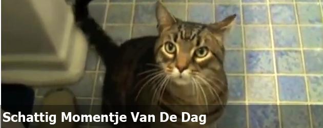 Schattig Momentje Van De Dag; een kat die luistert als een hond