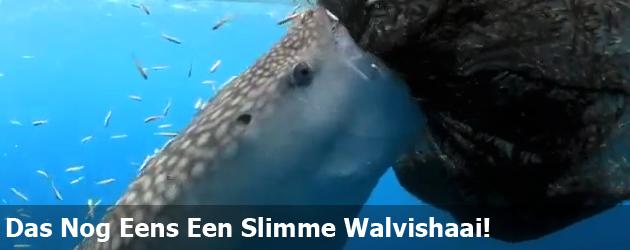 Das Nog Eens Een Slimme Walvishaai!