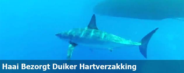 Haai bezorgt Duiker Hartverzakking