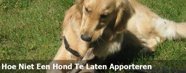 Hoe Niet Een Hond Te Laten Apporteren