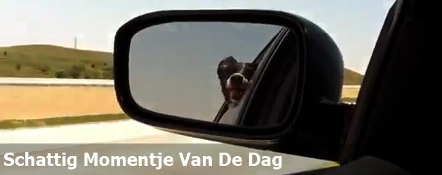 Schattig Momentje Van De Dag; hond wil autos eten