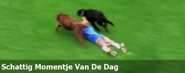 Schattig Momentje Van De Dag; honden race
