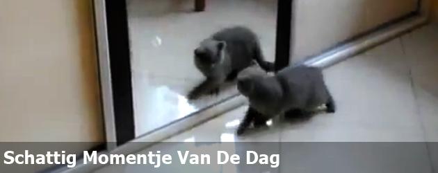 Schattig Momentje Van De Dag; kat ziet spiegelbeeld