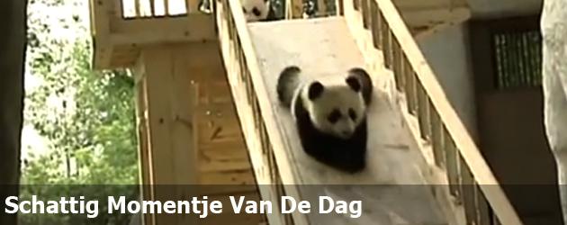Schattig Momentje Van De Dag; panda op de glijbaan