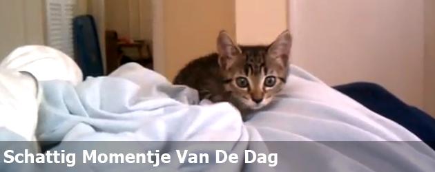 Schattig Momentje Van De Dag; kitten attack