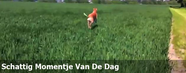 Schattig Momentje Van De Dag; Hond hopt als kangoeroe
