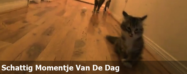 Schattig Momentje Van De Dag; niezende kat