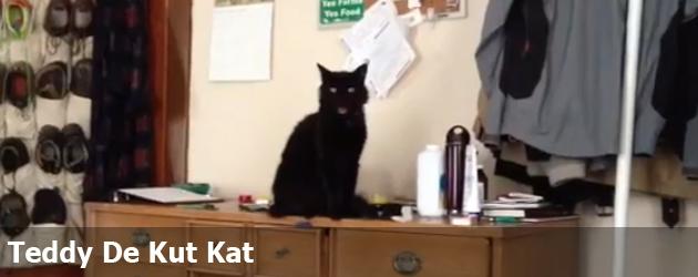 Teddy De Kut Kat