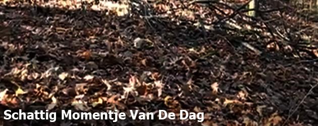 Schattig Momentje Van De Dag; lekker door de bladeren rollen