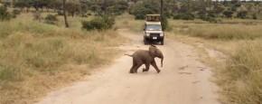Schattig Momentje Van De Dag: Een Baby Olifantje
