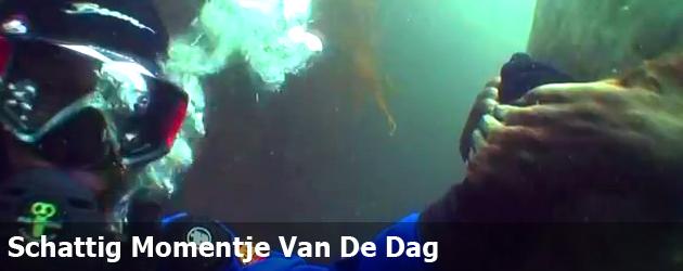 Schattig Momentje Van De Dag, handje vasthouden met zeehond