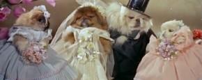 Trouw Hondjes: Schattig Of Zielig?