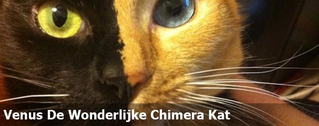 Venus De Wonderlijke Chimera Kat