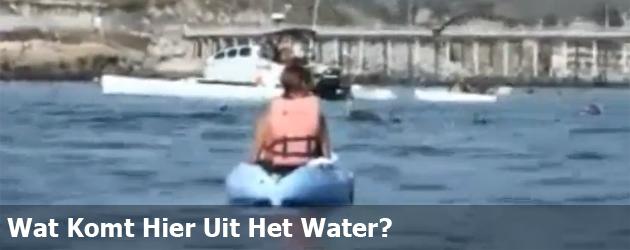 Wat Komt Hier Uit Het Water?
