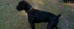 Hond Plast Tegen Schrikdraad
