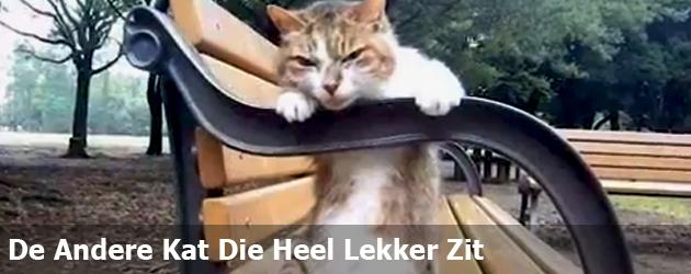 De Andere Kat Die Heel Lekker Zit