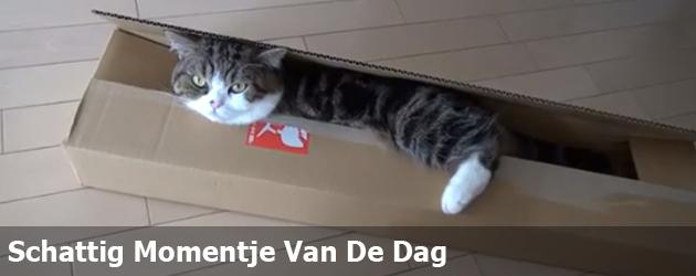 Schattig Momentje Van De Dag: Maru de kat en de langwerpige doos
