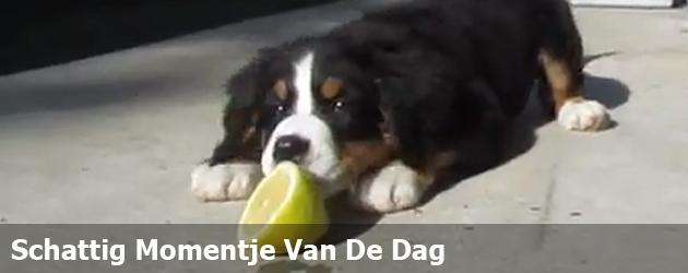 Schattig Momentje Van De Dag; hond versus citroen