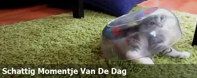 Schattig Momentje Van De Dag; kat vast in schaal