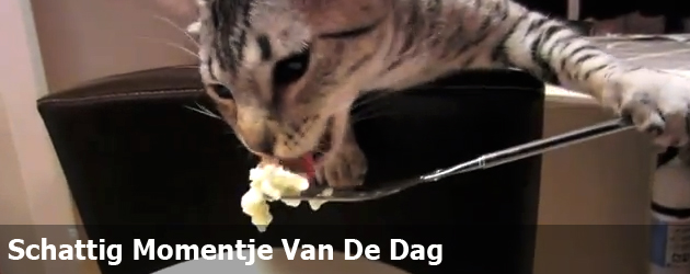 Schattig Momentje Van De Dag; poes eet met vork