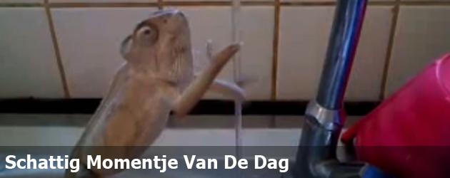 Schattig Momentje Van De Dag; kameleon wast handen