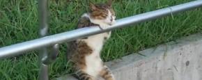Schattig Momentje Van De Dag ; super coole kat