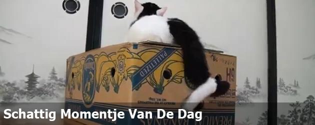 Schattig Momentje Van De Dag  twee katten en een bananendoos