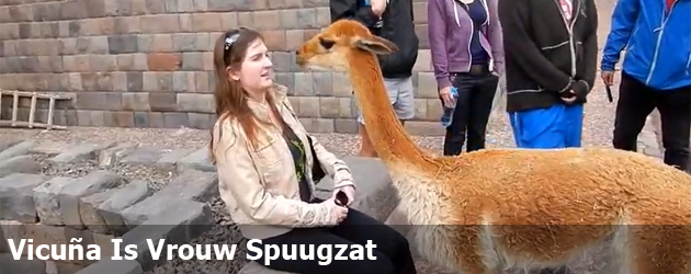 Vicuna Is Vrouw Spuugzat