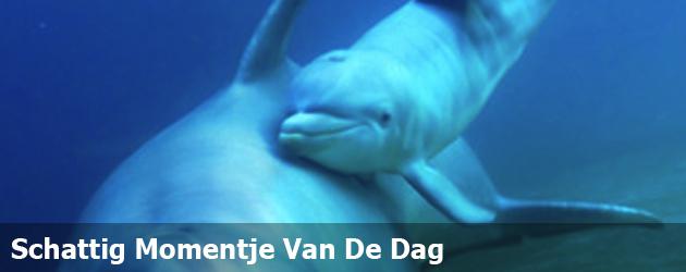 Schattig Momentje Van De Dag; de geboorte van een dolfijn
