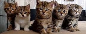 Schattig Momentje Van De Dag; nieuwsgierige kittens volgen alles