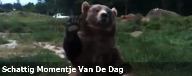 Schattig Momentje Van De Dag; beer zwaait