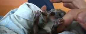 Schattig Momentje Van De Dag; egel vindt kriebelen erg lekker