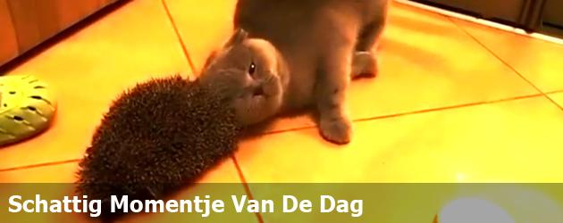 Schattig Momentje Van De Dag; goede manier om je kat te kammen