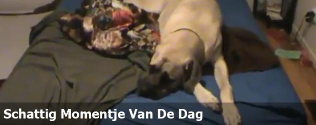 Schattig Momentje Van De Dag; hond met ochtendhumeur