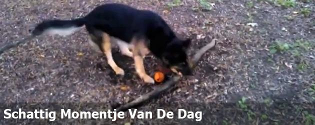 Schattig Momentje Van De Dag; hond wil wortel meenemen