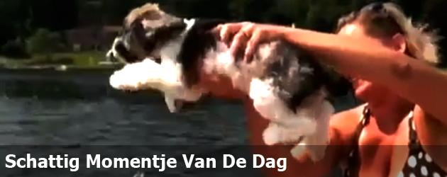 Schattig Momentje Van De Dag ; hond goed in luchtzwemmen