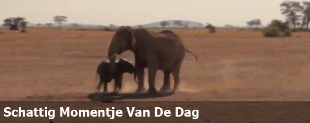 Schattig Momentje Van De Dag; olifantje redden