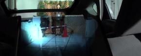 Cool! De Doorzichtige Achterbank!