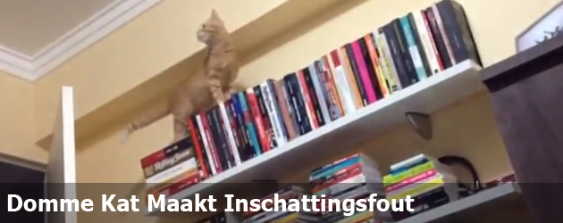 Domme Kat Maakt Inschattingsfout