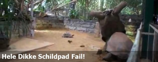 Hele Dikke Schildpad Fail!