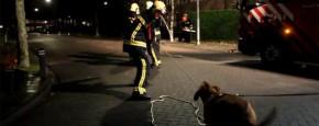 Hond Helpt Brandweer Een Handje Mee