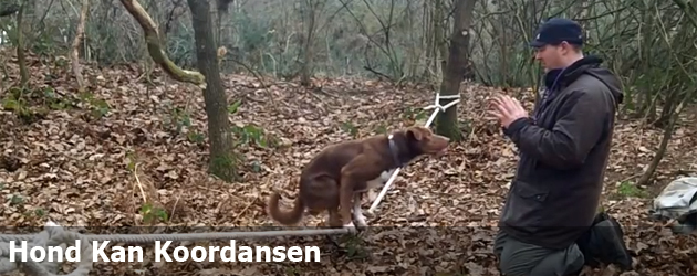 Hond Kan Koordansen
