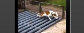 Hond Loopt Een Beetje Vreemd