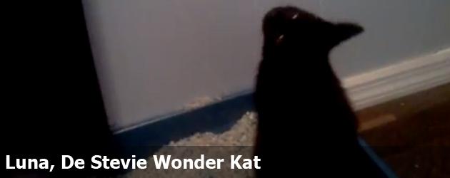 Luna, De Stevie Wonder Kat