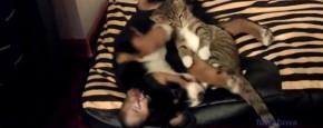 Schattig Momentje Van De Dag; puppy en kitten knuffelen