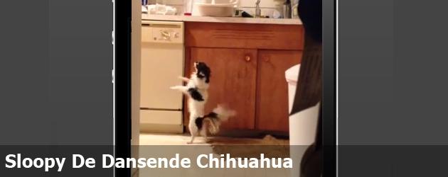 Sloopy De Dansende Chihuahua