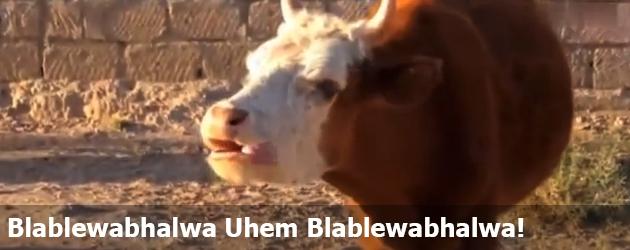 Blablewabhalwa Uhem Blablewabhalwa!