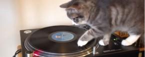 Bob Marley DJ Kat