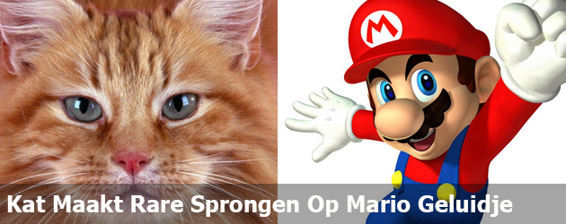 Kat Maakt Rare Sprongen Op Mario Geluidje